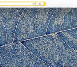 Yandex-Gorsel-365-An-webeyn